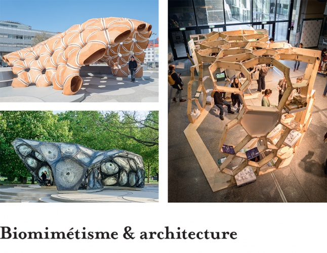 Biomimetisme & Architecture